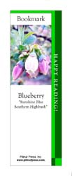 This bookmark depicts a Sunshine Blue Blueberry.