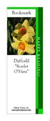 This bookmark depicts a Scarlet O'Hara Daffodil.