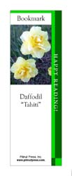 This bookmark depicts a Tahiti Daffodil.